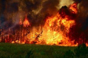40% лесных пожаров начала лета